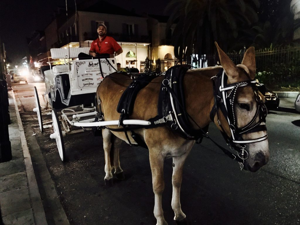 Royal Carriages New Orleans