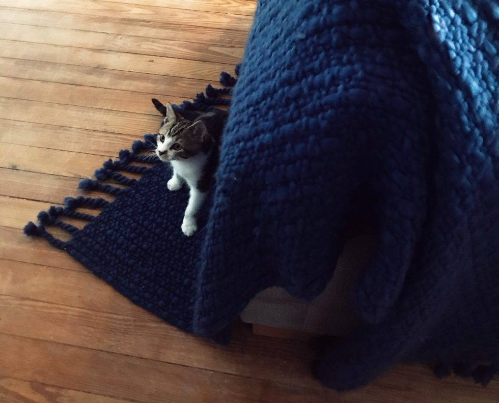 throw with cat