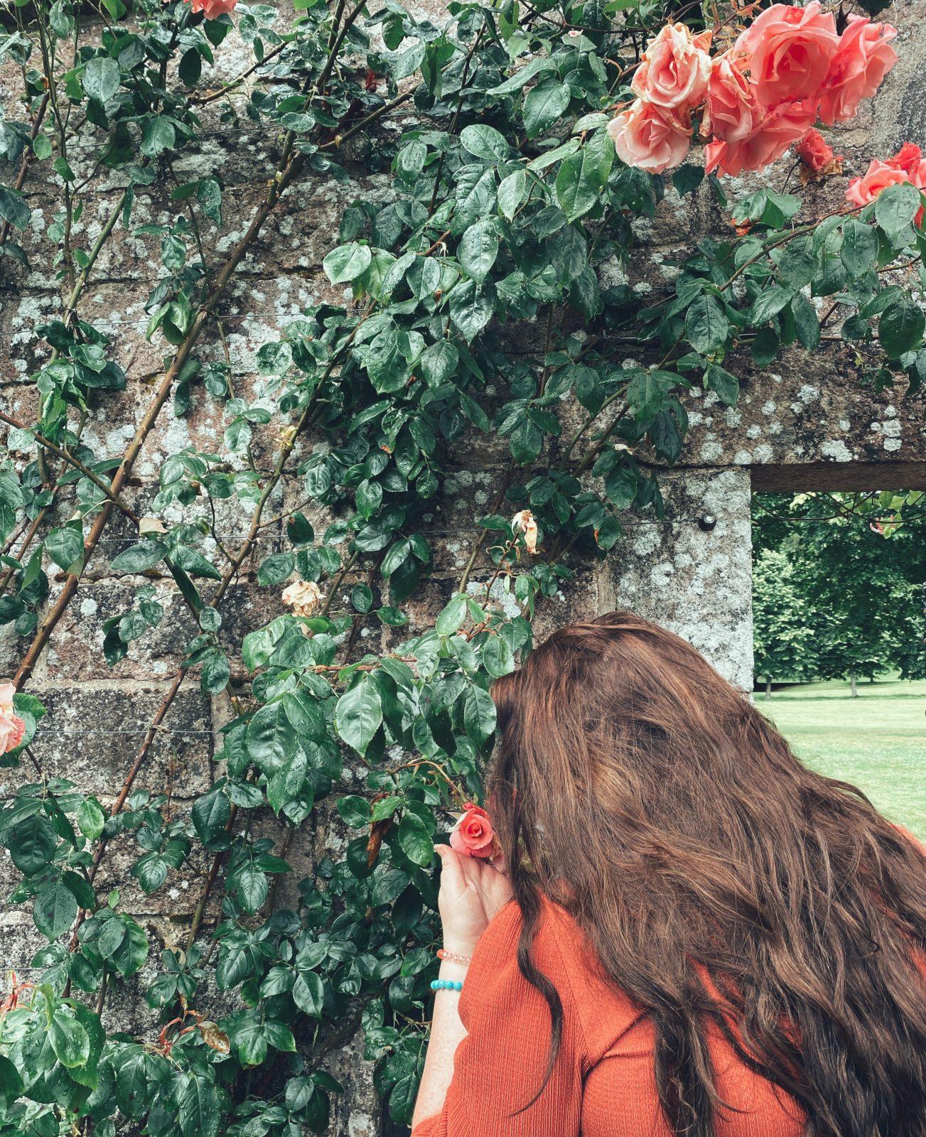 Crathes castle gardens