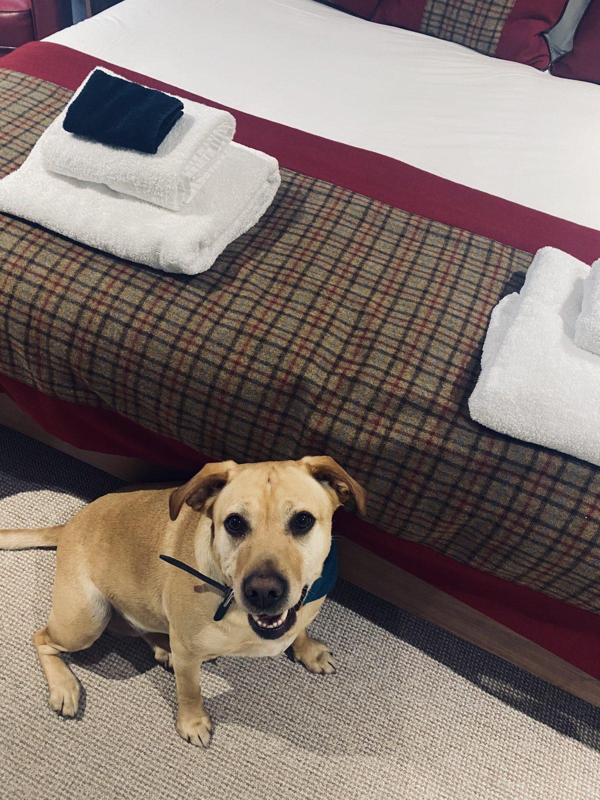 dog friendly Inverness hotel