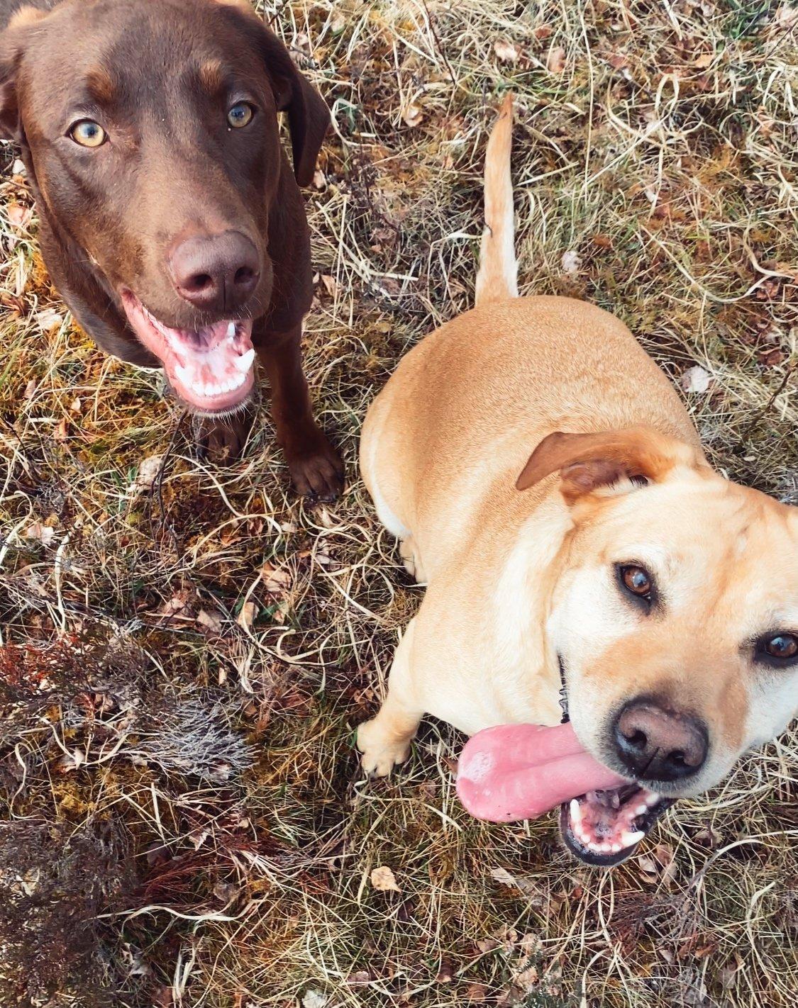 dog friendly Inverness