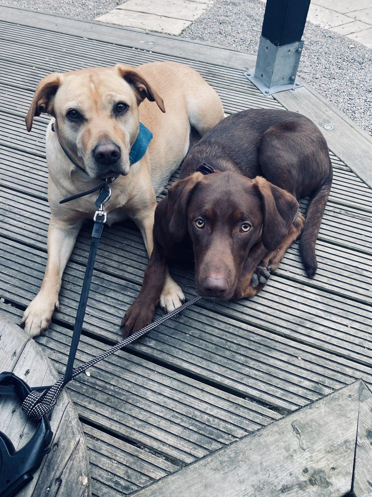 dog friendly restaurant with beer garden in Inverness